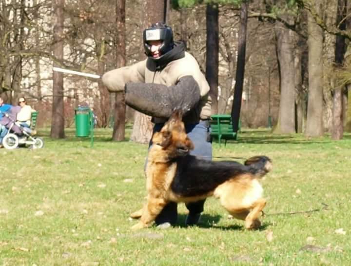 Dog Attack Krakow